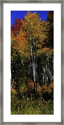Set 54 - Image 5 Of 5 - 10 Inch W Framed Print by Shane Bechler
