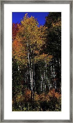 Set 54 - Image 5 Of 5 - 12 Inch W Framed Print