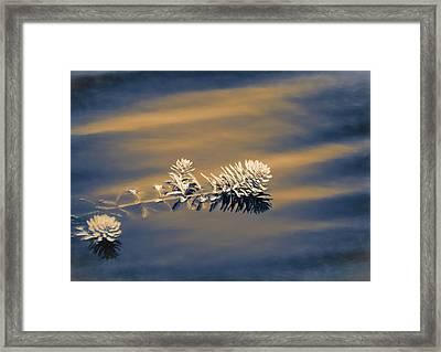 Set Apart Framed Print by Carolyn Marshall