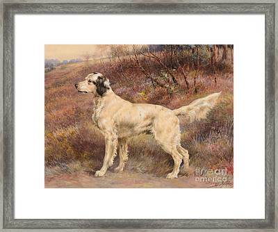 Setter On Profile Framed Print by Celestial Images