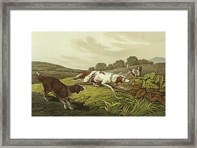 Setters Framed Print by Henry Thomas Alken