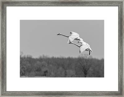 Framed Print featuring the photograph Setting Down 20176-1 by Thomas Young