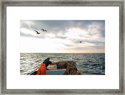 Setting Lobster Traps In Chatham On Cape Cod Framed Print