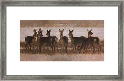 Seven Roe Deers Framed Print