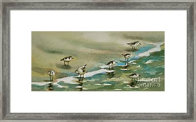 Seven Sandpipers At The Seashore  Framed Print