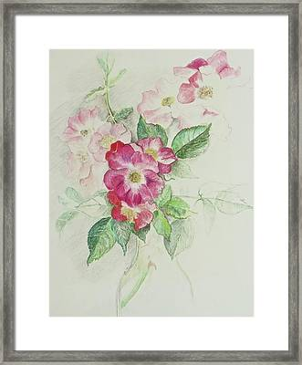 Seven Sisters Rose Framed Print by Bonnie See