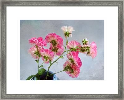 Seven Sisters Roses Framed Print
