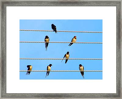 Framed Print featuring the photograph Seven Swallows by Ana Maria Edulescu