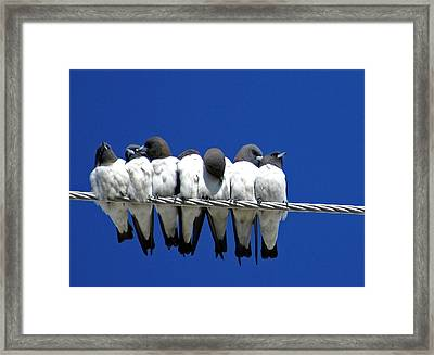 Seven Swallows Sitting Framed Print by Holly Kempe