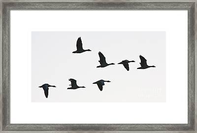 Sevenfold Geese Framed Print