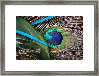 Several Feathers Framed Print