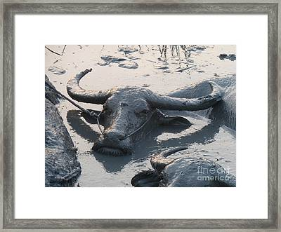 Framed Print featuring the photograph Several Water Buffalos Wallowing In A Mud Hole In Asia - Closer by Jason Rosette