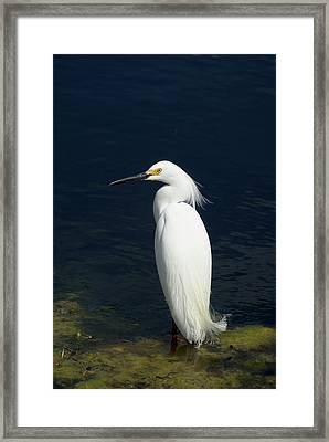 Sexier Than Humans Framed Print by Jack Norton