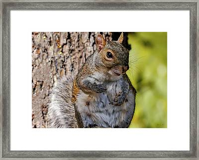 Framed Print featuring the photograph Sexy Squirrel by Bob Orsillo