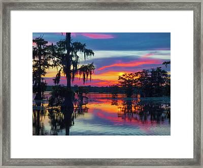 Swamp Sexy Framed Print