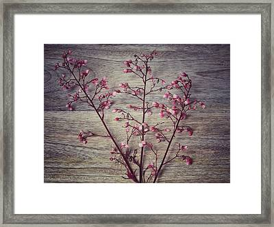 Shabby Chic Coral Bell Flowers Framed Print