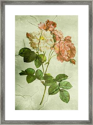 Shabby Chic Pink And White Peonies Framed Print