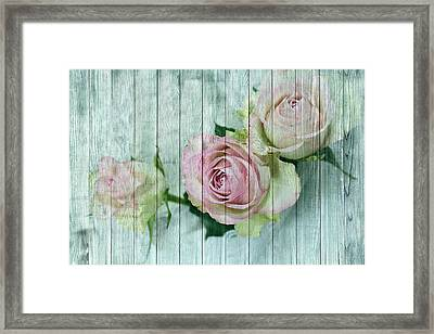 Shabby Chic Pink Roses On Blue Wood Framed Print