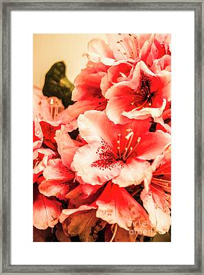 Shabby Chic Romances Framed Print by Jorgo Photography - Wall Art Gallery
