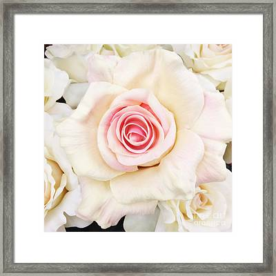 Shabby Chic Romantic White Pink Rose - Pastel Shabby Chic White Roses  Framed Print by Kathy Fornal