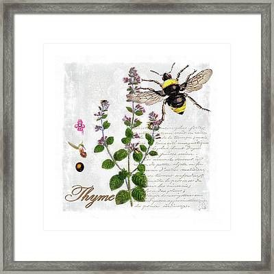Shabby Chic Thyme Herb Bumble Bee Botanical Illustration Framed Print by Tina Lavoie