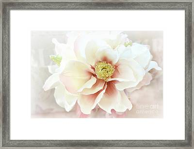 Shabby Chic White Dreamy Pastel Magnolia Blossom - Dreamy Magnolia Floral Decor Framed Print by Kathy Fornal