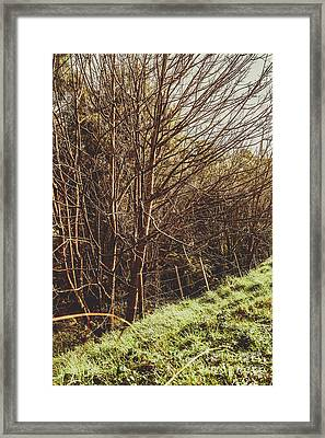 Shabby Leafless Trees Framed Print by Jorgo Photography - Wall Art Gallery