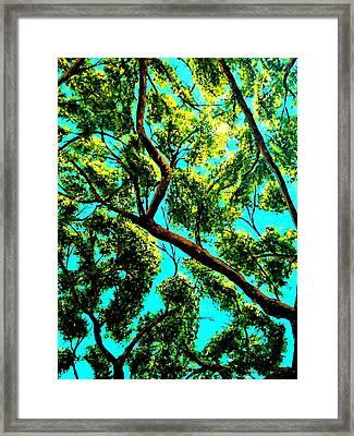 Shade Framed Print by Douglas Kriezel