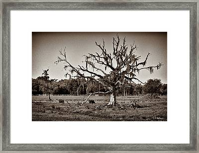 Shade Free - Sepia Framed Print by Christopher Holmes