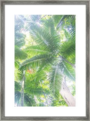 Shade Of Eden  Framed Print