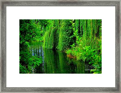 Shade Tree Framed Print