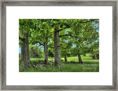 Shade Trees Framed Print