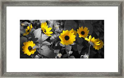 Shaded Daisies Framed Print