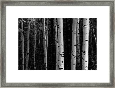 Framed Print featuring the photograph Shades Of A Forest by James BO Insogna