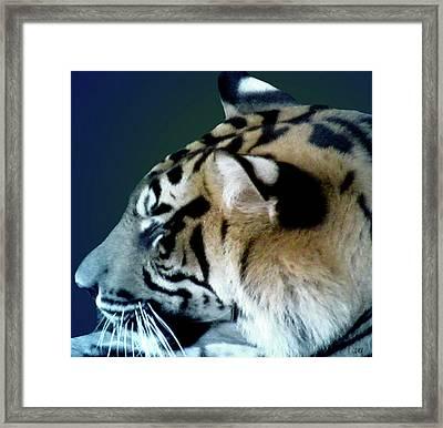 Shades Of A Tiger  Series Framed Print