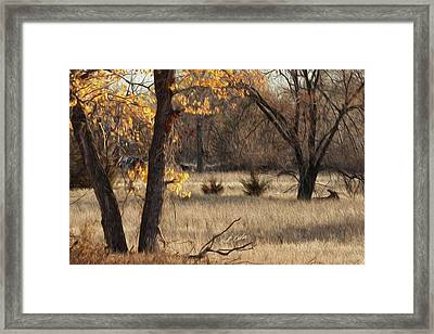 Shades Of Autumn Framed Print by Bill Kesler