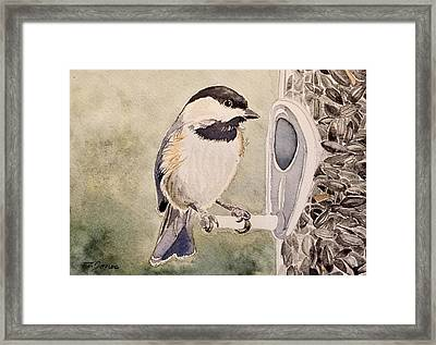 Shades Of Black Capped Chickadee Framed Print