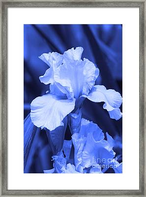 Shades Of Blue Iris  Framed Print