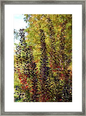 Framed Print featuring the photograph Shades Of Fall by Deborah  Crew-Johnson