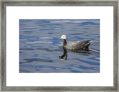 Shades Of Gray And Blue Framed Print by Tim Grams