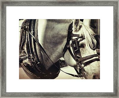 Shades Of Gray Framed Print by Dressage Design