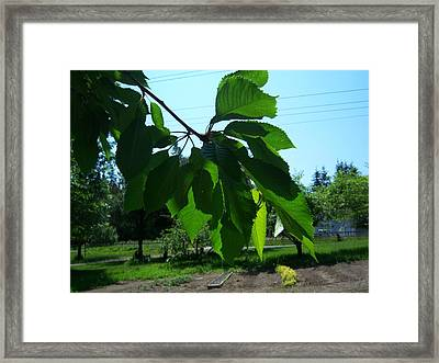 Shades Of Green 2 Framed Print by Ken Day