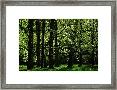 Shades Of Green Framed Print by Diana Shay Diehl