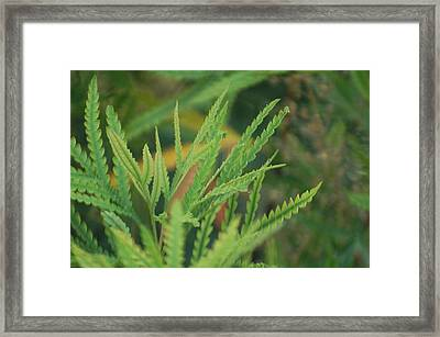 Shades Of Green Framed Print by Jean Booth