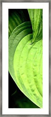 Shades Of Green Framed Print