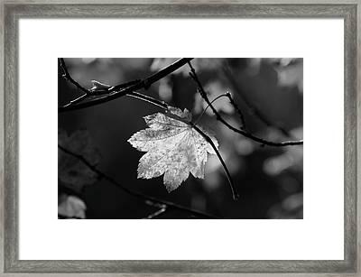 Shades Of Grey Framed Print