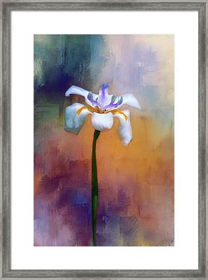 Shades Of Iris Framed Print by Carolyn Marshall