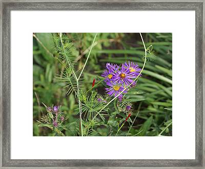 Shades Of Lavendar Framed Print by Debbie May