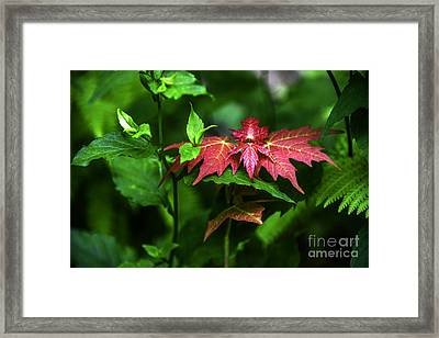 Shades Of Nature Framed Print