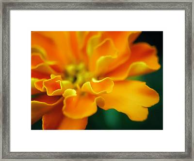 Framed Print featuring the photograph Shades Of Orange by Eduard Moldoveanu